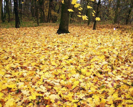 Autumn_Wallpaper_(33)